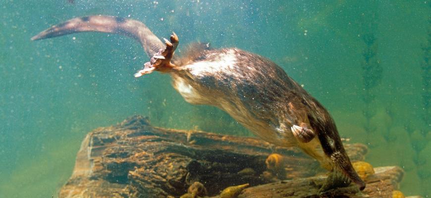Плывет под водой